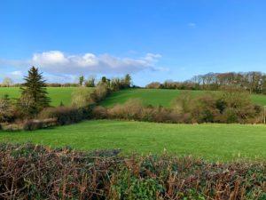 green Irish fields